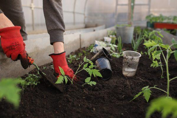 Small Business Idea starting a garden. Gardener with trowel.
